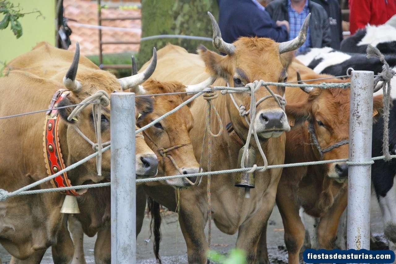 Feria de ganado de San Miguel